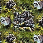 Picture of Wild Wings Masked Bandits Raccoons Cotton Fabric