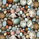 Picture of Birdwatching Speckled Bird Eggs Packed Cotton Fabric