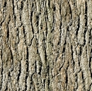 Picture of Nature's Glory Grey Tree Bark Cotton Fabric