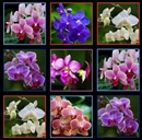 Picture of Digital Garden Orchid Flower Blocks 24x44 Large Cotton Fabric Panel