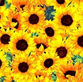 Picture of Fresh Flower Market 2 Sunflower Flowers Cotton Fabric
