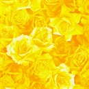 Picture of Fresh Flower Market 2 Yellow Roses Blooming Rose Cotton Fabric