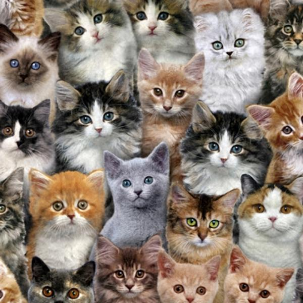 Picture for category Cat Fabrics
