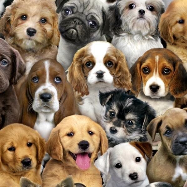 Picture for category Dog Fabrics