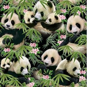 Pandamania Panda Bears and Bamboo Cotton Fabric