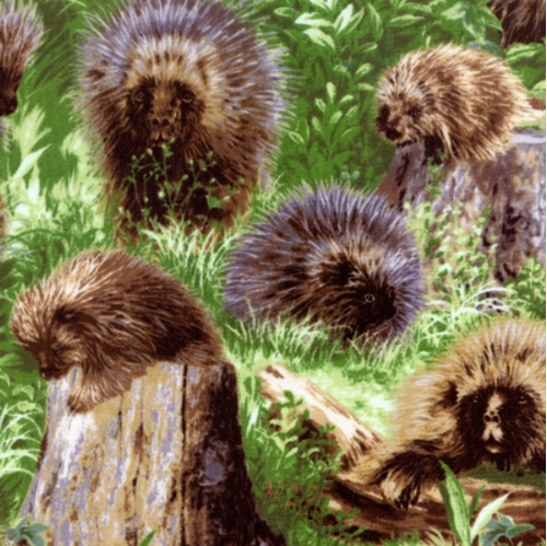 Backyard Bandits II Porcupines All Over Cotton Fabric