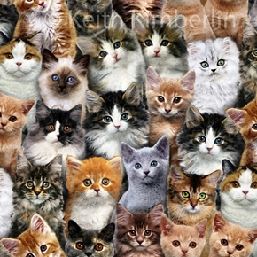 Picture of Adorable Pets Kitten Cat Collage Cotton Fabric