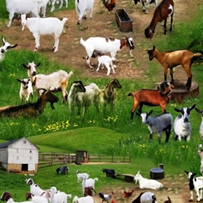 Picture of Farm Animals Goats in the Grass on the Farm Cotton Fabric
