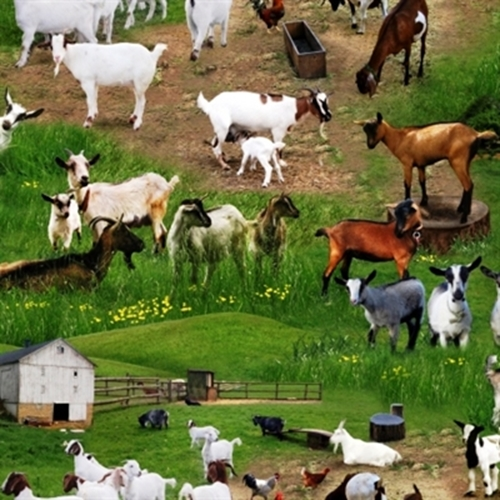 Farm Animals Goats In The Grass On The Farm Cotton Fabric