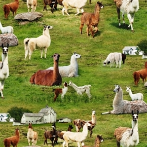 Farm Animals Llamas In The Grass On The Farm Cotton Fabric