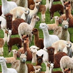 Farm Animals Llamas Alpacas Llama Alpaca Packed Cotton Fabric