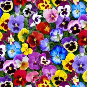 Lovely Pansies Packed Flowers Colorful Pansy Cotton Fabric