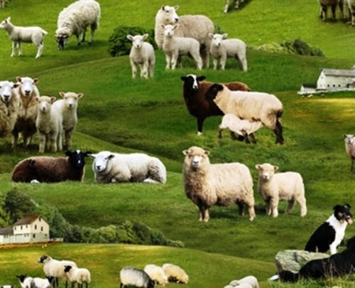 Farm Animals Sheep Grazing in the Grass with Sheepdog Cotton Fabric