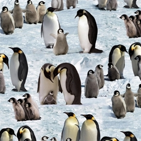 Picture of Penguins Penguin Families in the Snow Cotton Fabric