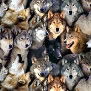 North American Wildlife Wolf Packed Wolves Cotton Fabric