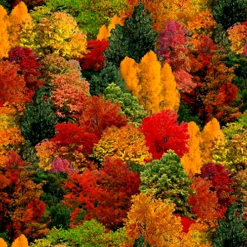 Landscape Medley Fall Colored Trees Autumn Leaves Cotton Fabric