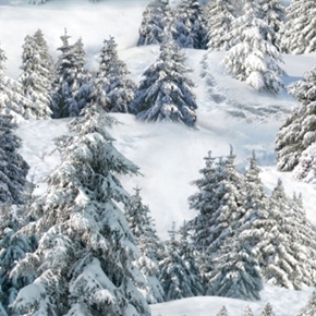 Landscape Medley Snow Covered Trees Snowy Forest Cotton Fabric