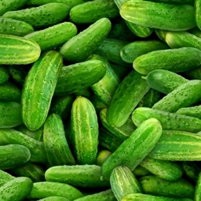 Food Festival Fresh Green Cucumbers Cotton Fabric