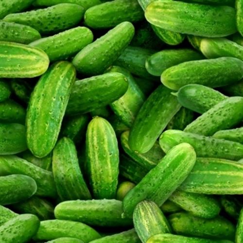 Food Festival Fresh Green Cucumbers Cotton Fabric