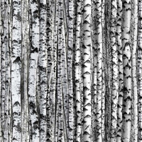 Landscape Medley White Birch Trees Rows Of Tree Trunks Cotton Fabric