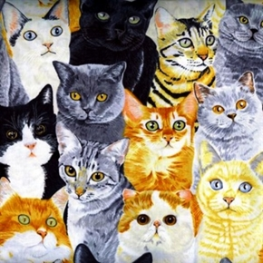 Picture of Cats and Kittens Fuzzy Kitties Packed Cotton Fabric