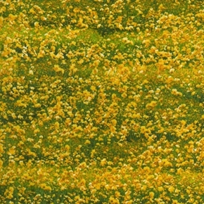 Danscapes Natural Architecturals Yellow Flower Fields Cotton Fabric