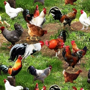 Picture of Farm Animals Chicken Hens Rooster Chicks in the Grass Cotton Fabric