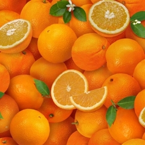 Food Festival Oranges Orange Halves And Slices Cotton Fabric