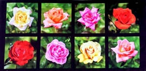 Picture of Roses Digital Rose Blocks Rose Blooms 24x44 Cotton Fabric Panel
