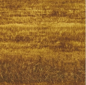 Picture of Danscapes 2015 Golden Grass Brown Grassy Field Cotton Fabric