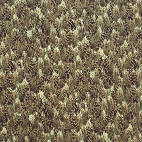Majestic Eagles Bald Eagle Wings Brown Feathers Cotton Fabric