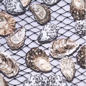 Maine Attractions Oyster Bay Pearl Shells Fishing Nets Cotton Fabric