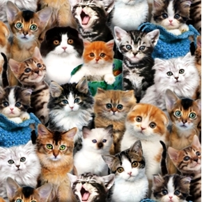 Picture of Cat Breeds Cute Kittens Cats Kitten Faces Cotton Fabric