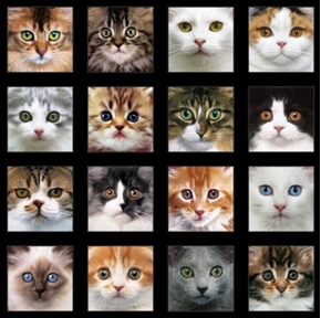 Picture of Adorable Pets Cats Kittens Kitten Face Block 24x44 Cotton Fabric Panel