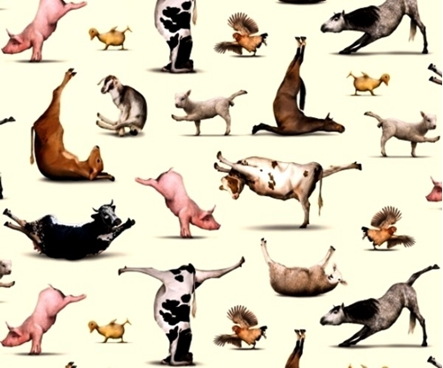 Farm Animals Horses Horse Breeds Packed Cotton Fabric