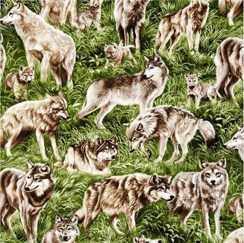 American Wildlife Wolf Wolves in the Grass Cotton Fabric