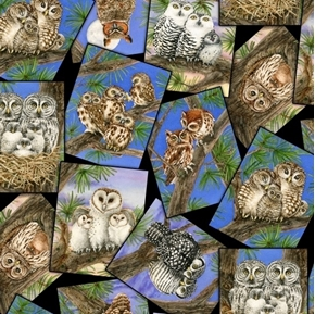 Picture of Owl Families Photographs of Owl Species Cotton Fabric