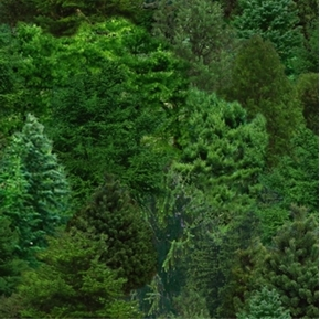Picture of Landscape Medley Green Forest Trees Evergreen Trees Cotton Fabric