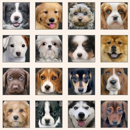 Adorable Pets Dogs Puppy Face Block Cream 24x44 Cotton Fabric Panel