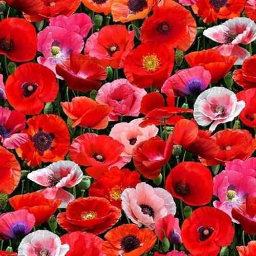 Cotton Fabric Floral Fabric Poppies Red Pink And Orange Blooming