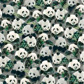 Imperial Panda Packed Pandas Eating Bamboo Gray Cotton Fabric