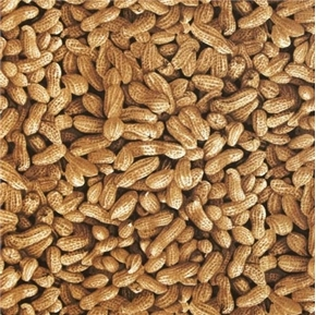 Picture of Farmer John Organic Peanuts in Shell Peanut Packed Cotton Fabric