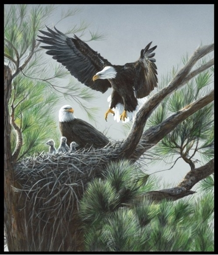 Picture of One of a Kind Eagles Nest Bald Eagle Digital Cotton Fabric Panel