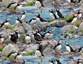 North American Wildlife Puffins Atlantic Puffin Bird Cotton Fabric