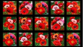 Poppies Blooming Red Pink Poppy Flowers 24X44 Cotton Fabric Panel