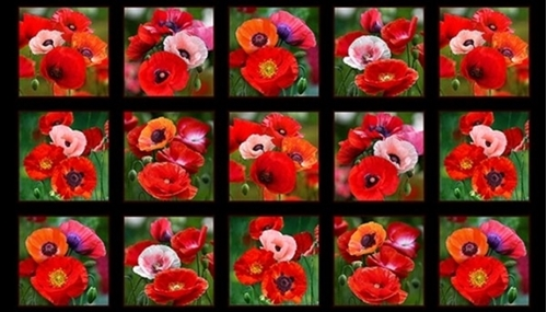 Cotton Panel Fabric Poppies Blooming Red Pink Poppy Flowers