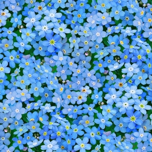 Cotton Fabric Floral Fabric Landscape Medley Forget Me Not