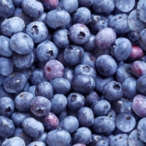 Picture of Berry Good Fresh Blueberries Blue Berries Cotton Fabric