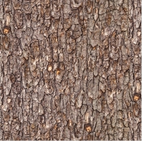 Landscape Medley Rough Wood Tree Bark Brown Cotton Fabric