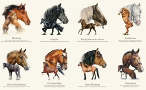 Picture of Horse Breeds Mustang Friesian Thoroughbred 24x44 Cotton Fabric Panel